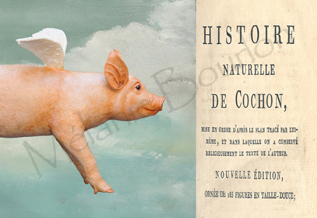 Cochon - Carte postales Mélanie Bourlon - série 1