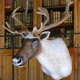 Caribou- Sculpture en papier de Mélanie Bourlon - 38 Le Avenières - Isère - Rhône-Alpes - France - Photo : Anthony Cottarel
