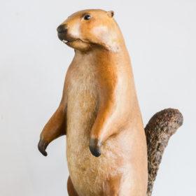 Marmotte- Sculpture en papier de Mélanie Bourlon - 38 Le Avenières - Isère - Rhône-Alpes - France - Photo : Anthony Cottarel