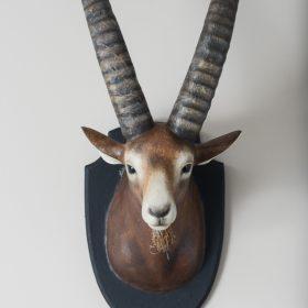 Mouflon trophée- Sculpture en papier de Mélanie Bourlon - 38 Le Avenières - Isère - Rhône-Alpes - France - Photo : Anthony Cottarel