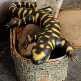 Salamandre- Sculpture en papier de Mélanie Bourlon - 38 Le Avenières - Isère - Rhône-Alpes - France - Photo : Anthony Cottarel