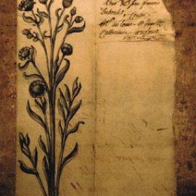 1.Herbier encre de chine - Peinture patine - Sculpture en papier de Mélanie Bourlon - 38 Le Avenières - Isère - Rhône-Alpes - France - Photo : Anthony Cottarel